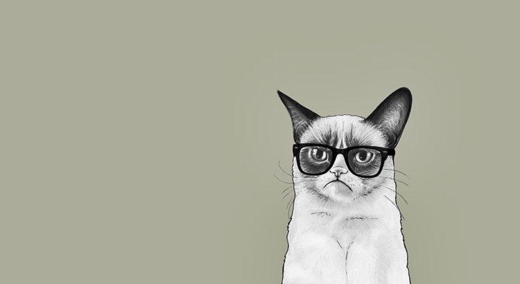 Заговоры для котов