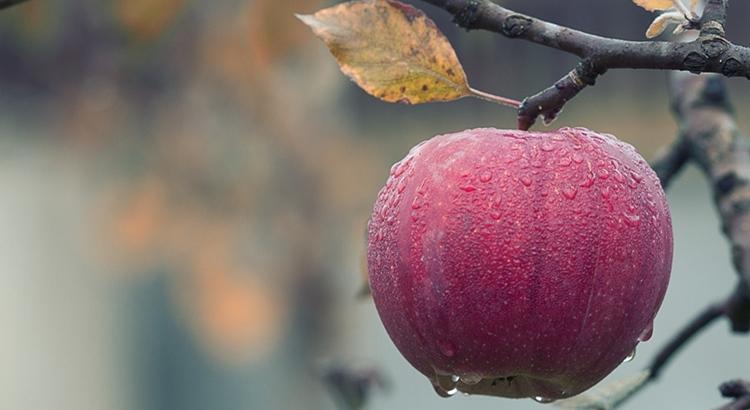 Заговор на яблоко насколько он эффективен