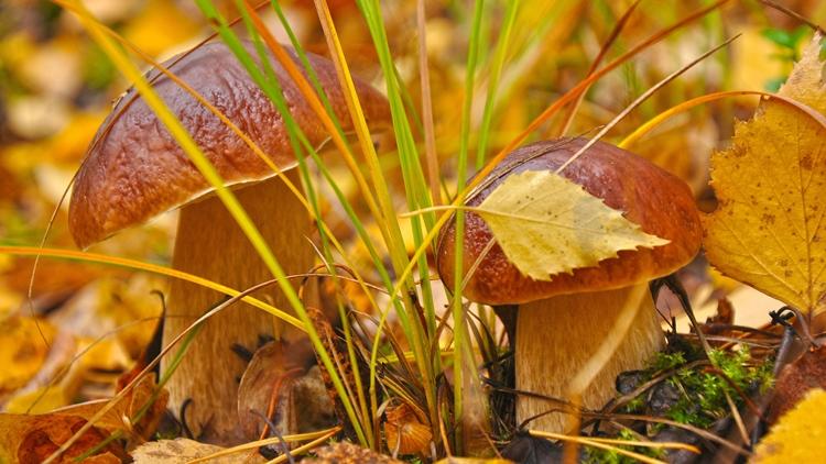Заговор на грибы: 100% работает → Все Заговоры