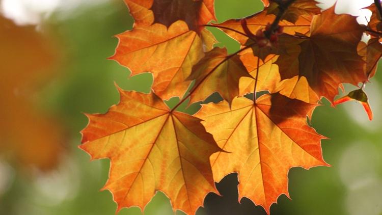 Заговор на листья