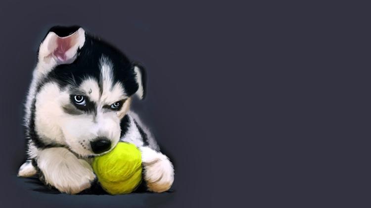 Собака воет заговор