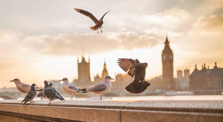Заговор на корм для птиц