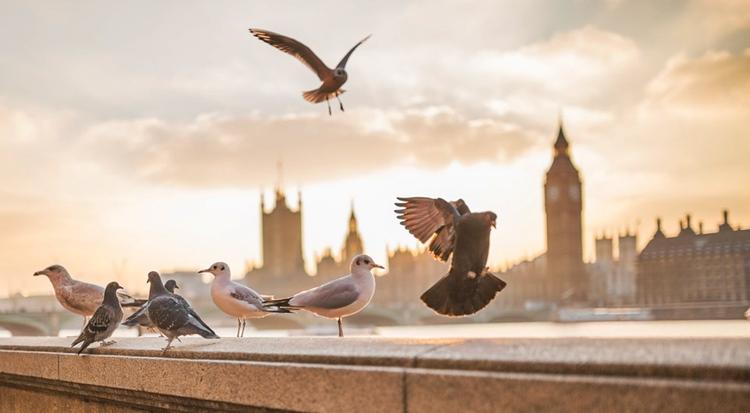 заговор при кормлении птиц на здоровье удачу деньги
