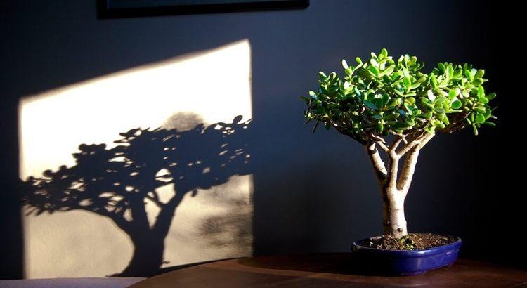 Как посадить денежное дерево с заговором на деньги