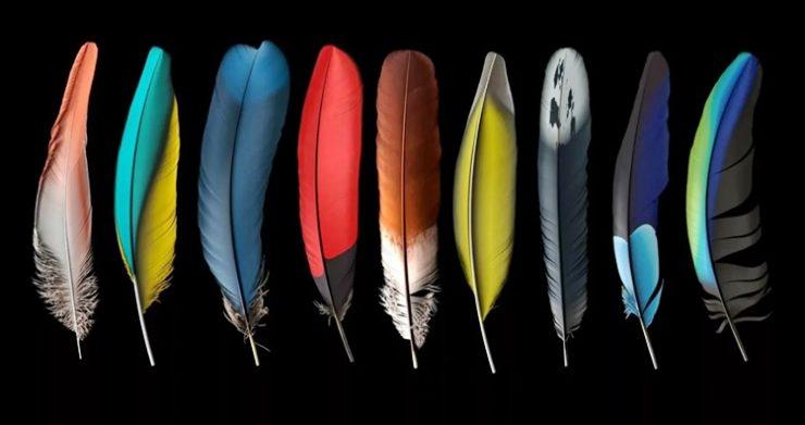 Заговор на перо птицы