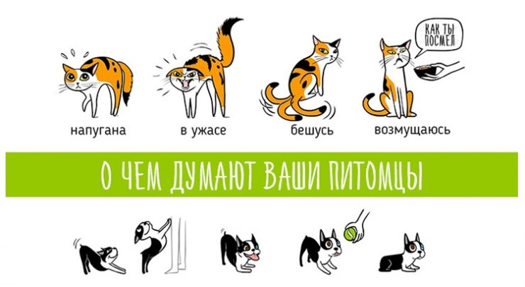 Заклинание чтобы научиться разговаривать с животными